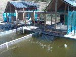 The tilapia pond at VHOH was developed with help from Poverty Resolutions.